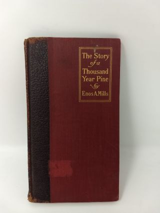 THE STORY OF A THOUSAND-YEAR PINE. Enos A. Mills.